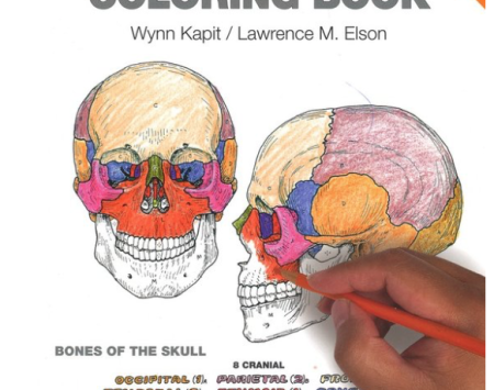 Essentrics Store Book The Physiology Coloring Book By Wynn Kapit