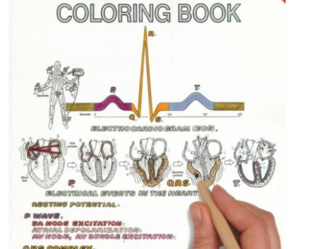 Essentrics Store | Book | The Anatomy Coloring Book – by Wynn Kapit